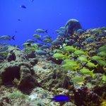 Amigable cardumen de peces tropicales