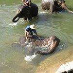 Elephants enjoying the water!