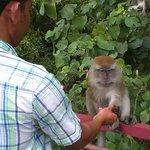 lot of monkeys