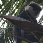 Иногда сад за рестораном посещают обезьяны