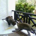 monkeys on balcony