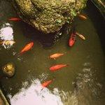 пруд с рыбками во дворе