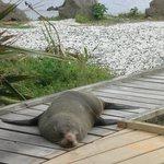 Fur seal...resting and posing!
