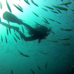 Epic dive at Chumphon Pinnacle