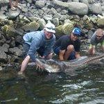 Sturgeon Fishing Charters