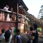 Ramp to get closer to the giraffe and feed them