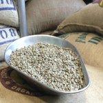 havana coffee's beans before roasting - best flat white!