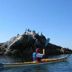 kayak-sillages-quiberon-morbihan-bretagne-2