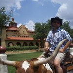 Want a photo of you on a longhorn?