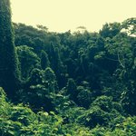 Nearby jungle scenery.