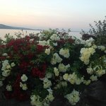 Beautiful flowers at sunset as seen from Cary Arms patio