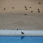Birds by the pool