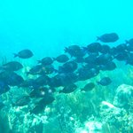 School of fish on deep edge of reef