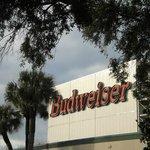 Bud brewery Jacksonville, Fl