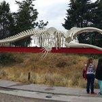 Esqueleto de la ballena franca a la entrada del ecocentro