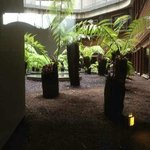 Tree fern atrium