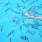 Séance snorkelling