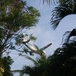 Самолеты на бунгало