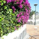 Området är otroligt vackert med buskar, blommor och fontäner.