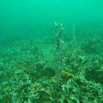 Mundo submarino en Bocas del Toro