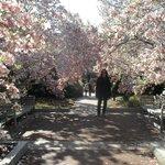 Jardim ao lado do Edifício do Smithsonian Institution em Abril