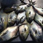 Febrary Pompano Fishing in Tampa