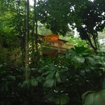 A cabin in the rain forest for budget travellers