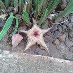 En el jardín,
