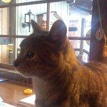 The Inn's Cat