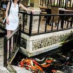 Кормим рыбок