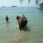 elefanter på stranden