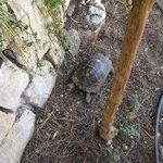 Повсюду черепахи