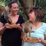 Squirrel Monkey Feeding Time
