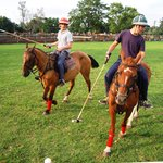 Playing polo (89389864)