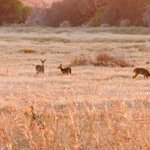 Love how the sun was just setting over this clearing  when a family of deer walked up