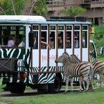 Transport bali safari