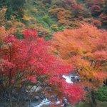 秋の野迫川村