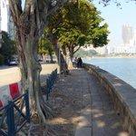 Avenida da Republica - lined with shady trees