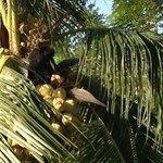 обезьяна, вид из номера