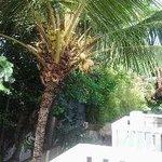 Пальма у балкона