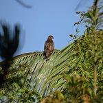 BoP seen from the garden