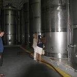 Tasting from the fermentation vats