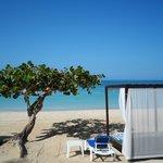 Grape tree and beach beds..so comfy