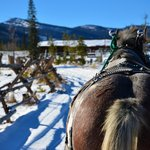 Great day for a sleigh ride!