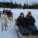 reindeer sledding in Tromso