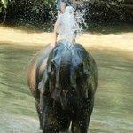 Elephant bathing at Chiang Dao Elephant Training Center