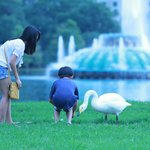 kids playing with birds on east side of lake