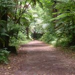 One of walking tracks
