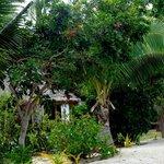 Dense vegetation provides privacy for bures