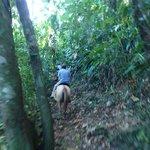 "Navigating through the ""jungle"""